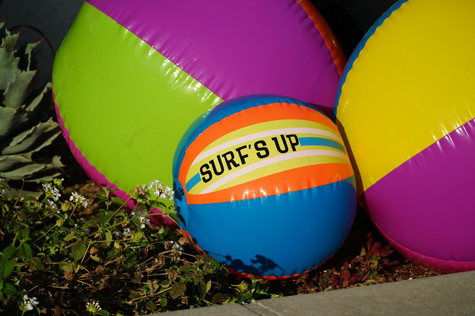 Hungry? Join us for Surf&#39s Up on June 14 in the Mission District
